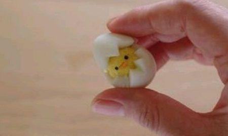 Haşlanmış Yumurtadan Nasıl Civciv Yapılır